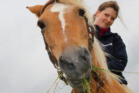 Pferd mit Reiterin